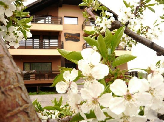 Pensiunea Margo Lounge & Business Resort