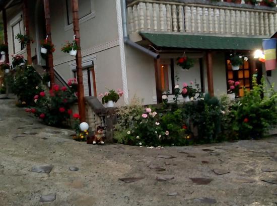 Pensiunea Casa Ionela Petreus